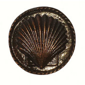 Tropical Collection 1-5/16'' Diameter Small Sea Shell Round Cabinet Knob in Antique Brass, 1-5/16'' Diameter x 5/8'' D x 1-5/16'' H