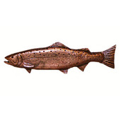 Fish Collection 5-1/16'' Wide New Long Trout Left Face Cabinet Pull in Antique Brass, 5-1/16'' W x 3/4'' D x 1-7/16'' H, Center to Center: 2-15/16''