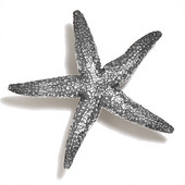 Scallops & Seahorses Collection 3'' Diameter Small Starfish Knob  in Polished Pewter, 3'' Diameter x 3/4'' D