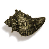 Scallops & Seahorses Collection 2-1/2'' W Whelk Knob in Antique Brass, 2-1/2'' W x 1-3/4'' D