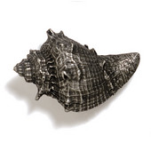 Scallops & Seahorses Collection 2-1/2'' W Whelk Knob in Antique Pewter, 2-1/2'' W x 1-3/4'' D