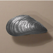 Scallops & Seahorses Collection 2'' W Mussel Knob Left Face in Polished Pewter, 2'' W x 1'' D