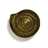 Scallops & Seahorses Collection 1-1/2'' Diameter Round Mini Sundial Knob in Antique Brass, 1-1/2'' Diameter x 1-1/8'' D