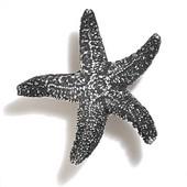 Scallops & Seahorses Collection 2-1/4'' Diameter Mini Starfish Knob in Polished Pewter, 2-1/4'' Diameter x 3/4'' D