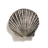 Scallops & Seahorses Collection 1-1/2'' W Mini Scallop Knob in Polished Pewter, 1-1/2'' W x 3/4'' D