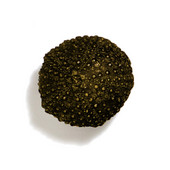 Scallops & Seahorses Collection 1'' Diameter Round Mini Urchin Knob in Antique Brass, 1'' Diameter x 1'' D