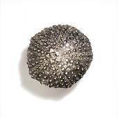 Scallops & Seahorses Collection 1'' Diameter Round Mini Urchin Knob in Polished Pewter, 1'' Diameter x 1'' D