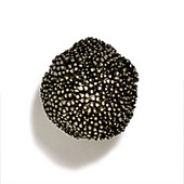 Pinecones & Jasmine Collection 1-1/2'' Diameter Round Seed Pod Knob in Polished Pewter, 1-1/2'' Diameter x 1-1/2'' D