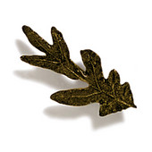 Pinecones & Jasmine Collection 2-1/4'' W Small Oak Knob in Antique Brass, 2-1/4'' W x 3/4'' D