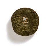 Bark, Leaves & Rocks Collection 1-1/8'' Diameter Round Ball Knob in Antique Brass, 1-1/8'' Diameter x 1-1/8'' D