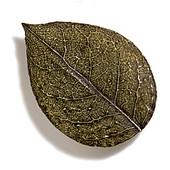 Pinecones & Jasmine Collection 3-1/4'' W Bishops Cap Knob in Antique Brass, 3-1/4'' W x 3/4'' D