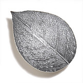 Pinecones & Jasmine Collection 3-1/4'' W Bishops Cap Knob in Polished Pewter, 3-1/4'' W x 3/4'' D